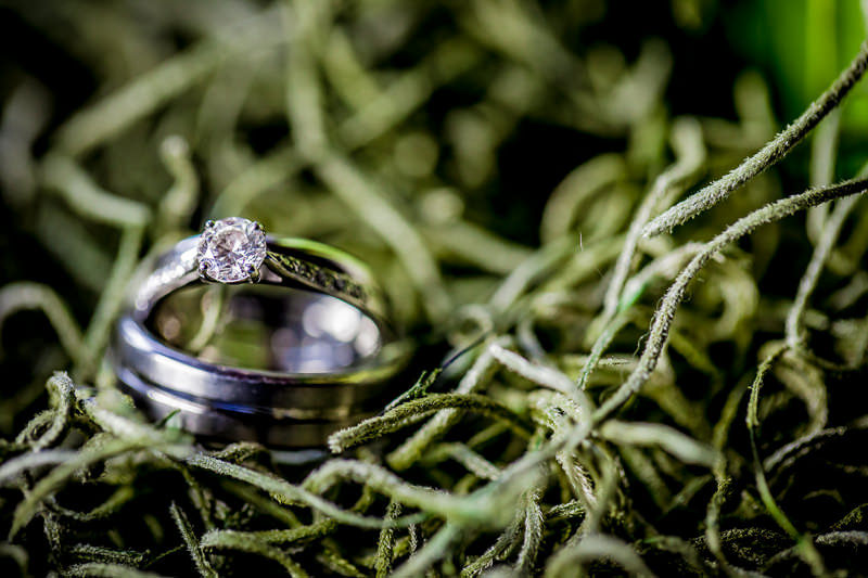 Wedding rings on a green base at Iscoyd Park